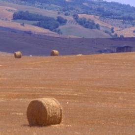 haystacks3