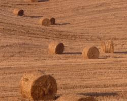 haystacks4