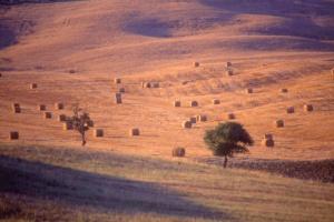 haystacks5