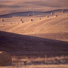 haystacks6