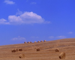 haystacks7
