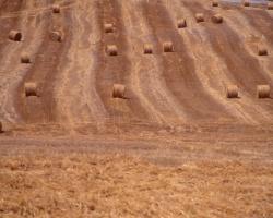 haystacks8